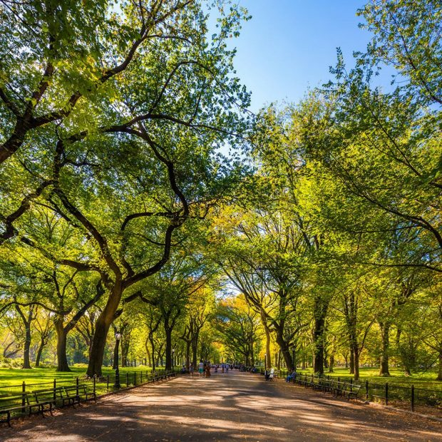 A Perfect Day in Central Park